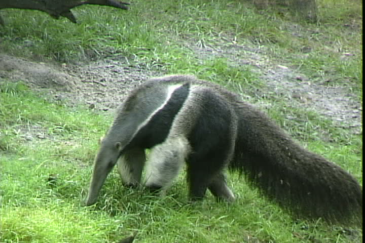 Fight Anteater Dangerous Animals Born Realist Cute Animals That Kill You Most Dangerous Animals In The World