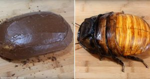 This Insanely Talented Cake Maker Bakes 'Madagascar Hissing Cockroach Cake'
