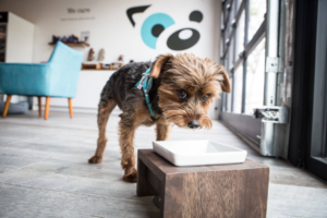 Top 5 Dog Cafes to Visit on a Date