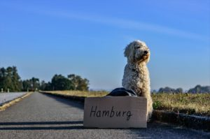 5 Pet-friendly Guided Tours Around the World